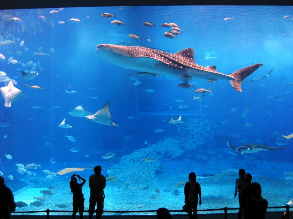 test1沖縄ちゅら海水族館にて ... : 4月 カレンダー イラスト : イラスト