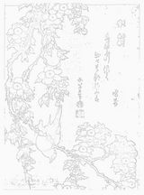 葛飾北斎 鶯垂桜図 ぬり絵