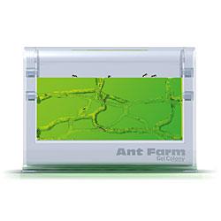 ant farm gel colony