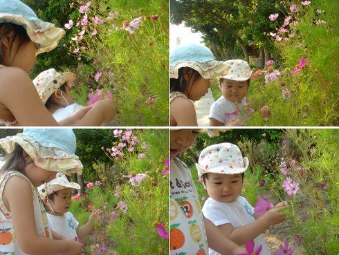 お花、いじいじ