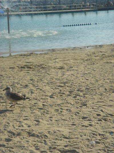 浜辺のかもめ