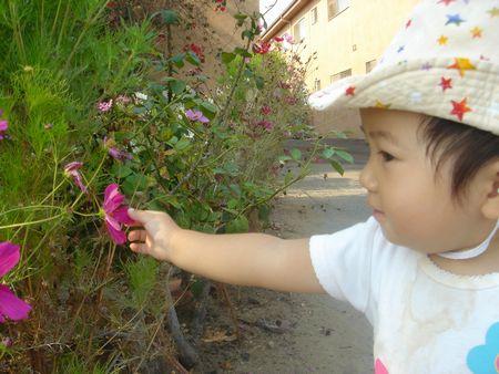 お花きれいねーーー