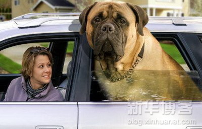 biggest_dogs_on_earth_5