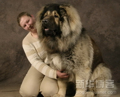 biggest_dogs_on_earth_1