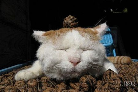 sleeping_cat_20