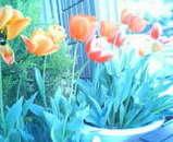 森さんの花