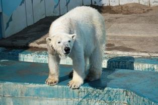 9釧路動物園 026
