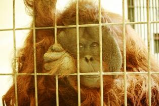 9釧路動物園 158