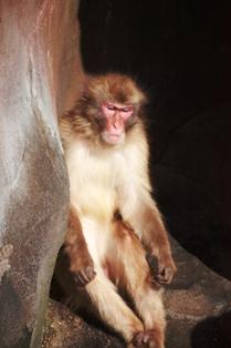 9釧路動物園 080