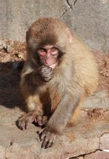 9釧路動物園 142
