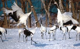 9釧路動物園 314