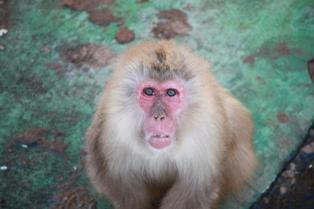 9釧路動物園 091