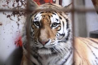 9釧路動物園 038