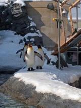 旭山動物園�
