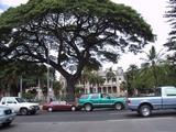 ハワイのハンサムな木