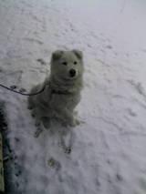 雪の中のまる