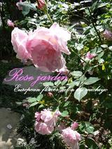薔薇のお庭