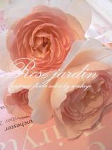エヴリン 薔薇