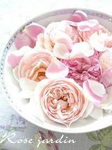 Romantique Rose