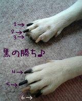 メリアの爪