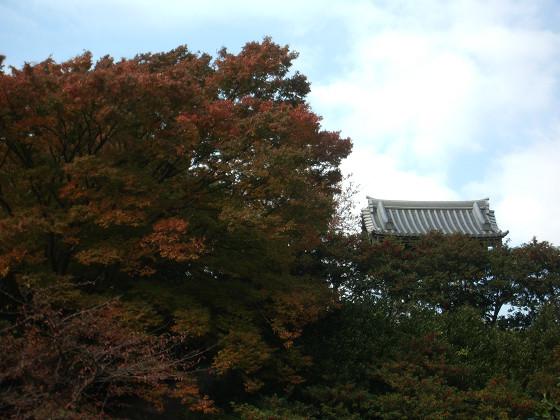 妙法寺の紅葉01