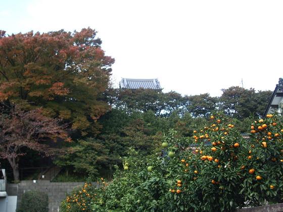 妙法寺の紅葉02