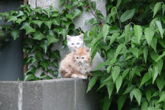 阿久和川遊歩道の猫 02