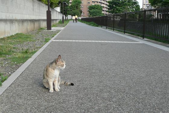 阿久和川遊歩道の猫 01