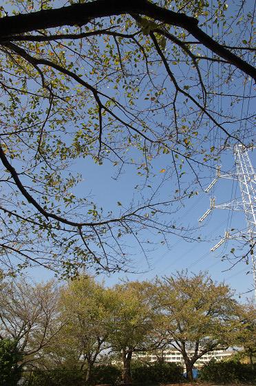 秋色の秋葉台公園 02