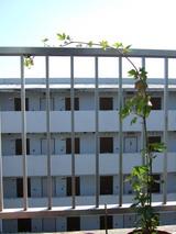 隣のマンション(旧)