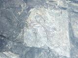 魚竜化石1