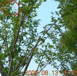 2006.8.13ビックサイトヘリコプター