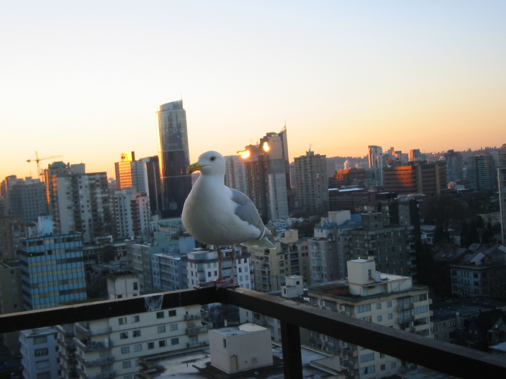 bird with city