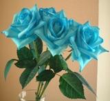 頑張った青いバラ