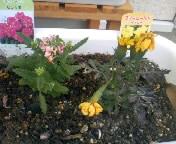 花壇の状況 (2)