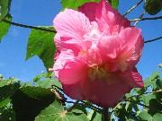 Kさん宅の広大な花 (5)