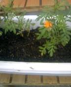 花の手入れ (2)