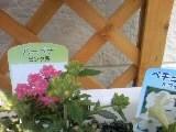 花壇入れ替え (2)