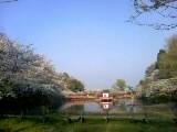 09公園桜