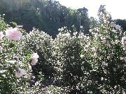 Kさん宅の広大な花