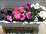 花壇入れ替え (3)