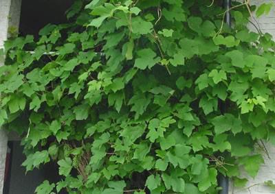 緑のボサボサスクリーン