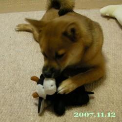 2007/11/12_2