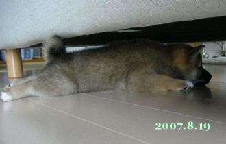 2007/8/19_4