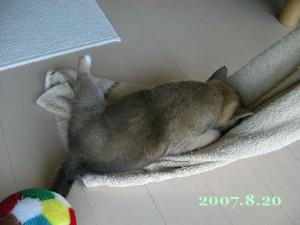 2007/8/20_2