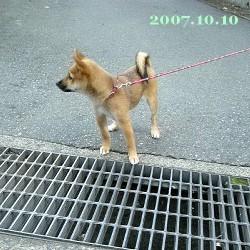 2007/10/10_1