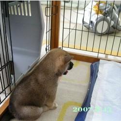 2007/8/13_1