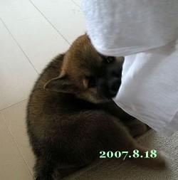 2007/8/18_2