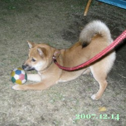 2007/12/14_1