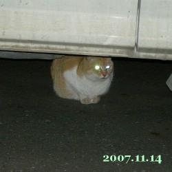 2007/11/14_1